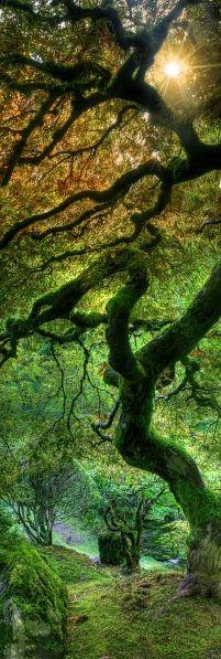 enchanting forest - colour inspiration for  Latch Farm Studios http://www.facebook.com/LatchFarmStudios