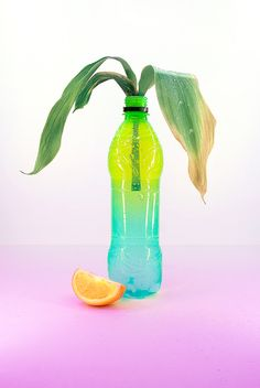Creative Good, Color, and Bottle image ideas & inspiration on Designspiration Still Life Photography, Art Photography, Bottle Images, Tropical, Color Studies, Art Direction, Color Inspiration, Decoration, Abstract