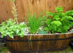 Parsley, Sage, Rosemary and Thyme: 3 Ideas for the Last of Your Herb Garden