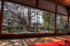 Frame garden by Ryusuke Komori on 500px
