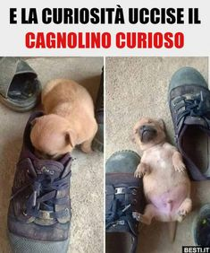 Todo para encontrar un lugar cálido donde acurrucarse - memes - Haha Funny, Funny Cute, Funny Dogs, Animal Memes, Funny Animals, Cute Animals, Funny Spanish Memes, Funny Relatable Memes, English Memes