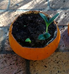 Pumpkin Activity for Kids Cilantro Lime Sauce, Happy October, Quick Easy Meals, Projects For Kids, Easy Recipes, Activities For Kids, Planter Pots, Pumpkin, Classroom