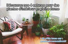 4 Astuces Pour des Plantes d'Intérieur En Pleine Forme.