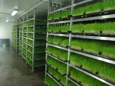 """""""Commercial Systems are available to Grow 1,000 – 10,000 lbs. of harvestable feed daily. Each pre-fabricated, insulated, climate-controlled building is designed with a semi-automated sprouting system and built with quality from start to finish."""" - http://livestockforagesolution.com/hydroponic-forage-systems/#"""