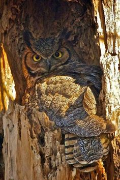 Owl... Perfectly Camouflaged....