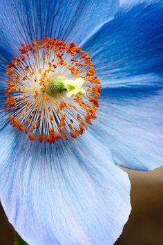 azul, tan tranquila y frágil