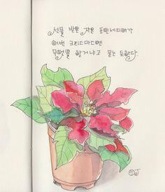 Poinsettia.  Watercolor.