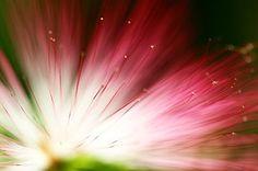 Flor De Eucalipto, Floral, Fundo, Parque