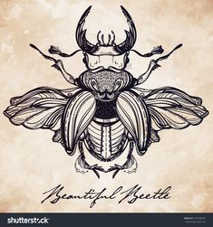 Beautiful hand drawn antique Stag Beetle,the largest insect. Vintage style tattoo vector art. Engraving romantic collection illustration isolated, aged paper. Print, fabric design. Elegant decoration.