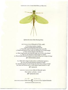Google Image Result for http://www.midnightpapersales.com/pages/mayflies/images/Mayflies-broadside_lg.jpg