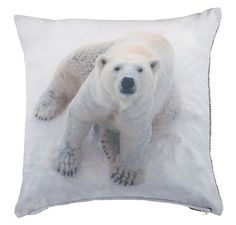 Coussin  polar