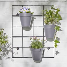 Outdoor Plant Wall Rack | Plant Pots Online London | Patch Wall Racks, Wall Hanger, Plant Hanger, Hanger Stand, Hanging Plant Wall, Hanging Pots, House Plants Decor, Plant Decor, Outdoor Plants