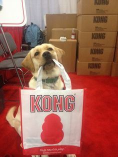 ECAD Service Dogs love Kong