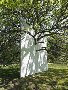 """""""Wall in Blue Ash Tree"""", 2011, installed at the Morton Arboretum, Lisle, IL."""