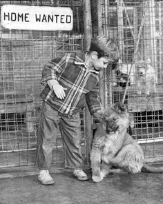 """No, the """"Home Wanted"""" sign doesn't apply to 5-year-old Bobby Manzer, but rather to the pup beside him. The young Omaha boy and his brother, Ralph, 8, visited the dog pound to """"cheer up the homeless fellows there,"""" said the original caption. According to the Feb. 8, 1942, newspaper, a citywide canvass had begun a week earlier to sell tags for all the dogs in Omaha in an effort to reduce the number ending up at the pound. THE WORLD-HERALD"""
