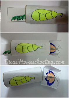 Ciclo de Vida Metamorfose Borboleta Ensino Educação Infantil Domiciliar Homeschooling
