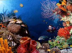Keindahan Alam Bawah Laut Di Taman Nasional Bunaken