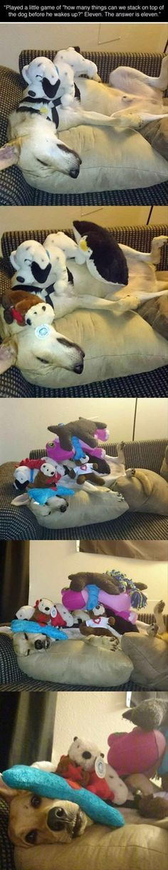 ♥ Funny Pets ♥ Funny animals or funny people. Sometimes it's  hard  to know the difference.