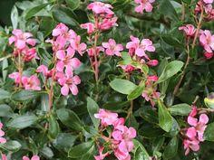 Balcon : 12 plantes brise-vue pour une intimité parfaite Parfait, Small Gardens, Balcony, Garden Landscaping, Plants, Flowers
