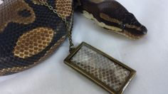 This is a lovely bronze necklace made from the shed for a Normal Ball Python (Python regius), just like the one shown in the photos. This item is