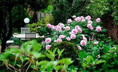 Wenn es im Garten blüht, dann blüht es auch in unseren Herzen! Plants, Handy Tips, Compost, Lawn And Garden, Plant, Planets
