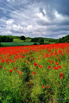 Wild Flowers Inspiration : Poppy Field, The Cotswolds, England by Giles Clare - Flowers.tn - Leading Flowers Magazine, Daily Beautiful flowers for all occasions Wild Flower Meadow, Wild Flowers, Beautiful World, Beautiful Places, Nature Sauvage, British Countryside, Amazing Nature, Mother Nature, Scenery