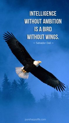 #life #quotes purehappylife.com - Intelligence without ambition is a bird without wings.