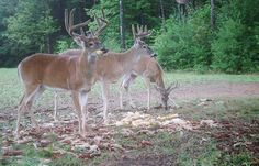 Deer Hunting: The Keys to Summer Scouting   Outdoor Life