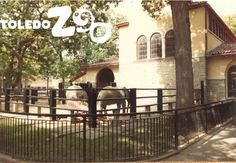 Elephants outside the Lodge, 1983 Photo: Toledo Zoo archives