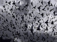 The bats have left the bell tower...