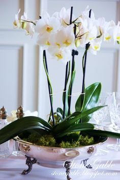 Phalaenopsis orchid plants - not necessarily in this pot but you get the idea how how it will look in the centre of the tables