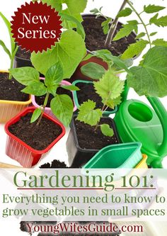 Gardening 101 ~  New