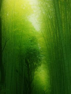 29 Ideas Beautiful Photography Makeup Ideas For 2020 Japanese Landscape, Green Landscape, Bamboo Landscape, Beautiful Places In Japan, Beautiful World, Beautiful Beach, Another Green World, Color Symbolism, Autumn Scenes