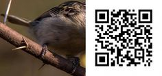 Scan the QR Code to view the correct answer Coding, Birds, Bird, Programming