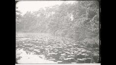 Video: MOOI NEDERLAND | Oisterwijk (1920) - Reportage over het natuurgebied bij Oisterwijk. Onder andere beelden van de vennen, de verschillende badplaatsen en een restaurant van de Vereniging tot behoud van Natuurmonumenten.