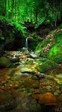 Nature's stream