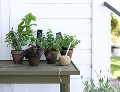 A Merry Mishap: herb garden
