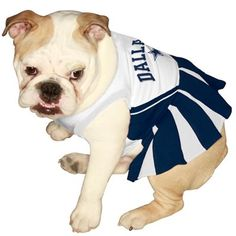 57 Best DALLAS COWBOYS ANIMAL FANS images  382b7dd8a