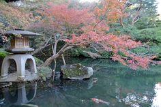 #momiji, #maple, #autumn leaves, #pond, #garden,