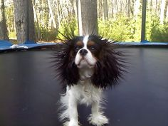 You too can have fur like this...all you have to do is jump on the trampoline or rub a balloon in it!