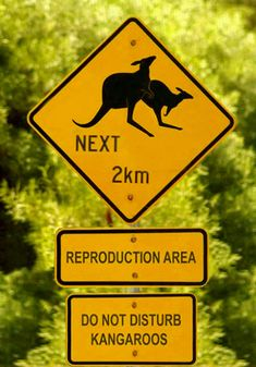 Explore the funniest weird road signs here in this post. These road signs will have you keeled over your steering wheel in laughter Funny Street Signs, Funny Road Signs, Fun Signs, Australian Road Signs, Australia Pictures, Thursday Humor, Funny Animals With Captions, Bizarre, Lol