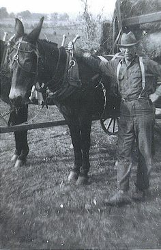 Here is an old photograph of my great-great grandfather and his team of mules that was taken on his farm in rural Caldwell County, Kentucky sometime during the 1930's...     Courtesy: The Nite Tripper. Mesa, Arizona (USA).