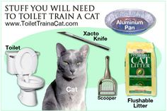 How To Toilet Train a Cat - DIY better than from store