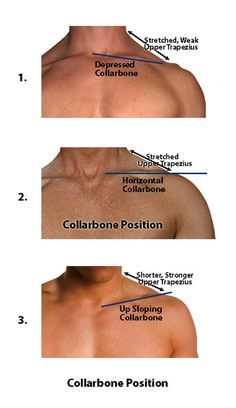 Overcoming Chronic Neck Pain: Postural Causes and A Unique Exercise Fix psoas release trigger points Fitness Workouts, Neck Exercises, Shoulder Exercises, Neck Pain Relief, Shoulder Pain Relief, Muscle Anatomy, Neck And Back Pain, Sports Massage, Massage Benefits