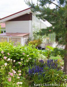 Viherpihan bloggari Kasvihormoni rakensi puutarhaansa suloisen kasvihuoneen. Katso blogipostauksesta ohjeet!