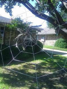 Do it yourself giant spider web using clothesline rope... Easier than you'd think.