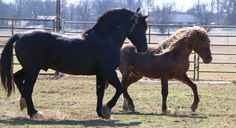 Developing New Methods and Tools for Managing Wild Horses and Burros