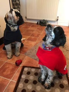 Happy Customer photo! Here are the gorgeous Monty and Connie in their Snugglezzz Drying coats. We think they both look very warm, snug and very cute. :) :D