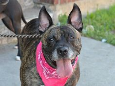 Brooklyn Center  TYSINA - A0931230  *** RETURNED 06/23/14 *** SAFER: AVERAGE HOME ***  SPAYED FEMALE, BR BRINDLE / BLACK, PIT BULL MIX, 6 yrs OWNER SUR - EVALUATE, NO HOLD Reason NYCHA BAN Intake condition NONE Intake Date 06/23/2014, From NY 11693, DueOut Date 06/23/2014, I came in with Group/Litter #K14-183097. https://www.facebook.com/Urgentdeathrowdogs/photos/a.617941078218775.1073741869.152876678058553/829077097105171/?type=3&theater