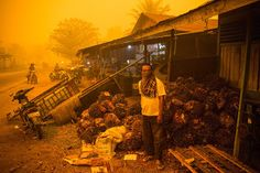 Kerry B. Collison Asia News: Indonesian fires lit by dysfunctional democracy